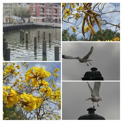 A Day Around the Waterfront! (jlynfriend) Tags: phonephotos tree blossoms sky clouds bird pier water buildings structures seagulls