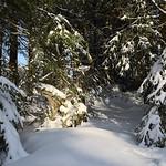 Harz-Oderbrueck_e-m10_1012074083 thumbnail