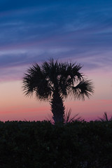 Palm trees and sunset (Theresa Rasmussen) Tags: wrightsvillebeach beach northcarolina obx sunrise sunset pastelskies atlanticocean