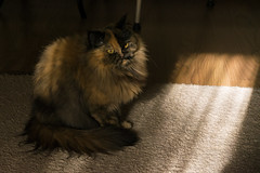 Klepa (dimatime37) Tags: cat nikon animal pat home light russia кошка свет