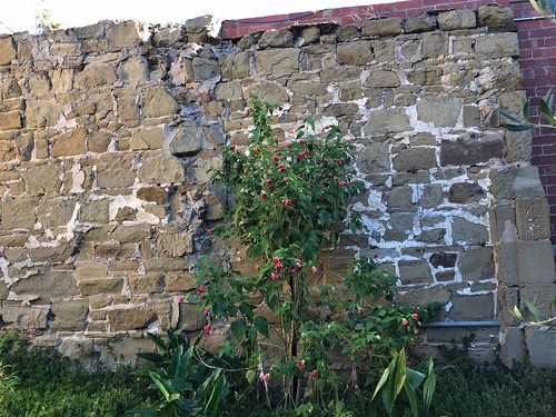 Stone wall, Geelong