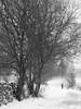 solitude (mojo images) Tags: snow blizzards alone storm black white bleak cold