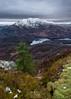 Ben A'an Pine (Craig Hollis) Tags: ben aan macdui loch katrine lock lomond trossachs scotland landscape craig hollis