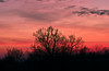 Hot pink fire (L*Ali) Tags: nikon d500 sigma1770mmf28macro sunset ontario trees pink orange coral clouds courtice