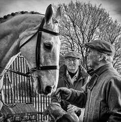 Old friends (Nanooki) Tags: friends meet people horse hounds mono blackwhite nik silverefexpro country tradition boxingday kennels petworth petworthpark nationaltrust