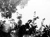 Nature Noir 58 (Rossdxvx) Tags: blackandwhite noir naturenoir dark darkwater woods darkwoods art silhouette shadows 2017