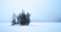 Fog (Juuso Tasso) Tags: lake fog trees ice snow winter january