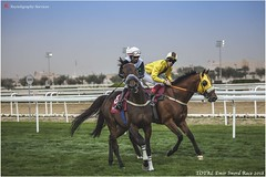 IMG_7112 copy (Services 33159455) Tags: qatar doha horse racing qrec emir horseracing raytohgraphy