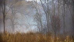 Foggy Forest (Faron Dillon) Tags: fog foggy ontario canon 5ds 7020l is ii ef70200lisii soft color golden blue yellow richmondhill nature landscape trees saturated morning winter