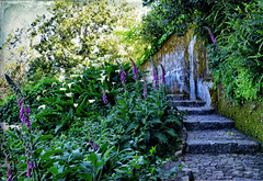 Enchanted Garden (Jocelyn777) Tags: flowers plants steps stones wall cobblestones path moss green sintra portugal travel textured foliage