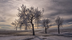 Land of the Frost (Paul Domsten) Tags: tree sky road park grass landscape snow foliage badlands southdakota pentax nationalpark badlandsnationalpark frost cold winter art fineart conatabasinoverlook