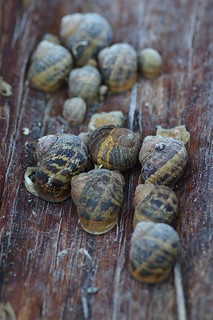 Over wintering snails....
