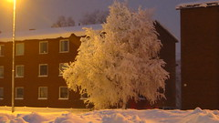 IMG_4344 (Mr Thinktank) Tags: raureif frost