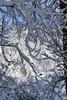 Cow (buffaloalice) Tags: minnesota snowstorm haycreek landscape creek cow barn red snowday bridges