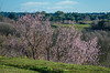 13 febbraio 2018. Roma, valle della Caffarella (adrianaaprati) Tags: landscape park tree flowering sky clouds meadows flowers pink nature outdoors blooming