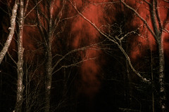 (Frida J) Tags: nature trees dark forest