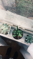 Sun-time (graceevans1) Tags: family shadows window green love succulents marble sunlight plants