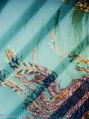 From the Pier (lorinleecary) Tags: centralcoastcalifornia patterns sansimeon shadows bluegreen lines seaweed water