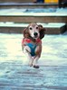 Flying Hound (Seb Rogo) Tags: basset hound snow running jumping