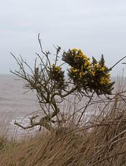 Holderness Coast (mark_fr) Tags: holderness coast coastline fastest eroding europe south hornsea mappleton east riding yorks yorkshire erosion tidal action storm surge cliff cliffs soil tunstall
