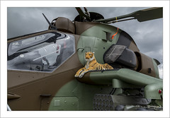 The tiger on the tiger (Francis =Photography=) Tags: europa europe france grandest moselle camplahorie meeting 57 arméedeterre frencharmy hélicoptère helicopter hubschrauber rotors army tigre tiger eurocopterec665tigre eurocopter airbushelicopters airbus hélicoptèredattaque