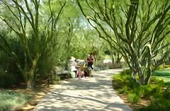 Sunnylands Garden (France-♥) Tags: 2292 sunnylandsgarden garden jardin effetaquarelle paintingeffect sentier trail green vert palmdesert artist walkway tree arbre