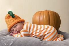 Baby Pumpkin (Francine Schumpert) Tags: babyportrait baby pumpkins newbornportrait nikond810 portrait