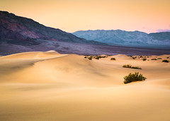 Dunes of Death Valley (andreassofus) Tags: deathvalley mesquite mesquiteflatsanddunes sand sanddunes ddesert mountains sunrise sunset sky mounainscape lines light shadow landscape grandlandscape nature america nevada summer summertime travel travelphotography outdoor nopeople layers pattern abstract canon manfrotto