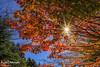 FXT24767 (kevinegng) Tags: churehitopagoda fujiyoshida yamanashi japan 日本 山梨県 富士吉田市 忠霊塔 autumn autumnleaves redleaves red autumnscene starburst
