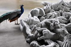 Vanitas (-hndrk-) Tags: peacock gardenstatues junkyardofsculpture ontourwithwillwilson bayarea napavalley usa nikond90 hndrk aworkofart dirosacollection