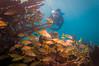 Peek-A-Boo (RoamingTogether) Tags: diving florida floridakeys ikelite ikeliteds51 keylargo molassesreef nikon nikon181053556 nikond300 pennekampstatepark scuba scubadiving watersports