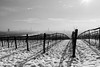 Winter In Nussdorf (macplatti) Tags: xt2 xf1855mmf284rlmois winter misty mist wineyard dunst skyline panorama nussdorf monochrome bw swschwarzweiss landscape landschaft wien vorarlberg austria aut