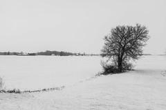 Still (thedailyjaw) Tags: ohio cleveland wauseon midwest us snow winter freezing powder tree minimal wisps barren