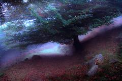 PAGOA (juan luis olaeta) Tags: bosque forest paisajes landscape hayedo pagoa fog nieblas laiñoa otoño autumn udazkena canoneos60d canon nature naturaleza