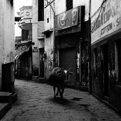 Varanasi, and the Ganges 002 (haribote) Tags: carlzeiss varanasi india cf100mmf35 hasselblad cityscape trix 503cw 400tx kodak uttarpradesh インド in