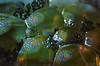 Speckled. (pics by paula) Tags: speckled macromonday macromondays macro monday mondays bubbles oil water glitter sparkle lights spot spots spotty abstract picsbypaula paula wayne
