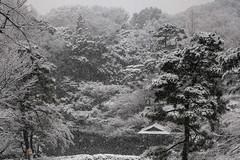 Seeing Edo through Snowy Tokyo (Rekishi no Tabi) Tags: edo tokyo japanesegarden happoen minatoku japan fujifilm snow winter