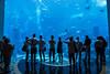 Dubai Atlantis Aquarium (Tiziana de Martino) Tags: acquarium water fishes people sagome silhouette destination emirates dubai