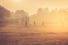20180114-DSC_2912 (Mivr) Tags: india nehrupark golden hour newdelhi delhi in