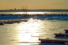 frozen pier docks lac CVGR Aylmer Marina Qc CDA DSCN2440 (dodochampo) Tags: lake deschenes cvgr marina frozen docks ice snow sunshine outdoor winter pier hiver neige glace lac