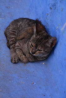Cat Chefchaouen Morocco_2122