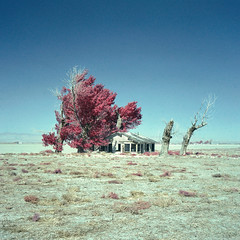 high desert farmhouse (color infrared). mojave desert, ca. 2017. (eyetwist) Tags: eyetwistkevinballuff eyetwist abandoned vacant farmhouse tumbleweeds mojavedesert california film analog colorinfrared mamiya 6mf 75mm color infrared ir cir cir120 russian ishootfilm mamiya6mf mamiya75mmf35l colorinfraredcir analogue mamiya6 square 6x6 120 filmexif iconla epsonv750pro lenstagger mediumformat bw 022 yellow yellow022 filter magenta blue mojave desert highdesert landscape derelict homestead ranch house empty broken windows bleak barren dry drought dust apocalypse grapesofwrath steinbeck joads american west rural decay desolate lonely farm trees americantypologies antelopevalley