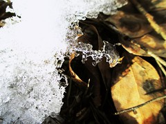 Canon ixus 132 (dron16011991) Tags: лед макросъёмка ice macromode macroshot macrophotography canon ixus132