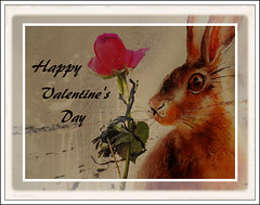 HAPPY ST VALENTINE'S DAY (Blue P❀ppy) Tags: valentine valentines valentinesday ashwednesday stvalentinesday stvalentine art artwork bunny rabbit bunnyrabbit rose soundtrack poem poetry prose quote quotation ap poppy poppycocqué p❀ppy theairthatibreathe thehollies beach seaside island found foundobject discarded treasure sentiment heartfelt love friendship memories stoptosmelltheroses artistic sweet bladderwrack seaweed sand