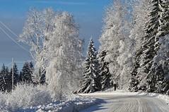 Winter road (Stefano Rugolo) Tags: stefanorugolo pentax k5 pentaxk5 vivitar80200mmf4macrofocusingzoommc winterroad winterscene road bend tree sunnyday sunny landscape snow winter hälsingland sweden sverige curve frost shadows