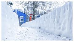 Down the Garden Path... (Timothy Valentine) Tags: 2018 home 0118 pathway snow eastbridgewater massachusetts unitedstates us