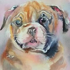 狗 (sushipulla) Tags: 狗 dogs dog animalportrait animalsart animals pets bulldog watercolour watercolors