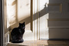 Pretty Kitty (aloof.photo) Tags: art ditator bw echo im empty alone jk lol hahahaha ha he h