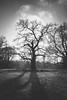 Shorne Woods, England: Creepy tree. (David Claringbold) Tags: shorne woods england kent united kingdom lightroomraw nikon d750tamron2470 wood woodland tree trees branch branches leaves dead decay bw black white creepy dark mysterious sky clouds