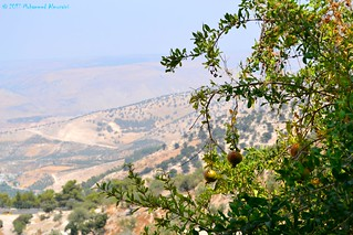 Pomegranate Tree and Golan Heights شجرة رمان ونهر اليرموك وهضبة الجولان